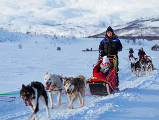 alaskan huskies, sled ride, tromso, norway