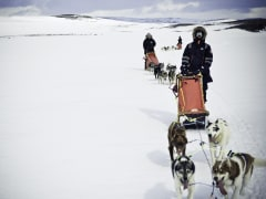 huskies, dog sledding, norway, tromso