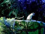 singapore_safari-night_158 (1)