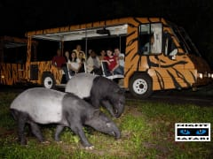 singapore safari night tour