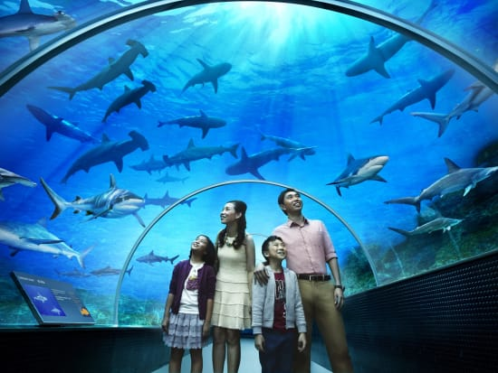 singapore_sentosa_SEA-aquarium_rws_shark-seas