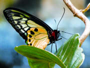 singapore_sentosa_butterfly-park-and-insect-kingdom_tour-east-singapore
