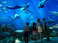 Singapore Sentosa SEA Aquarium