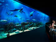 Sentosa_Singapore_SEA_Aquariumtrade (2)