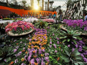 singapore_gardens-by-the-bay_flower-dome