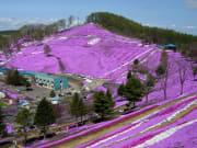 大空町東藻琴芝桜公園