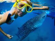 セブ_ジンベイザメと泳ぐ2