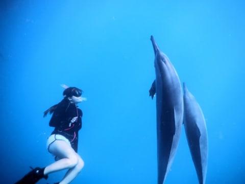 イルカ/マンタ/クジラ
