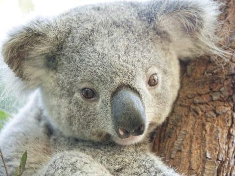 オーストラリアの動物とふれあい...