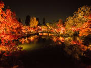 15_11_2016 Light up Eikando 82_1