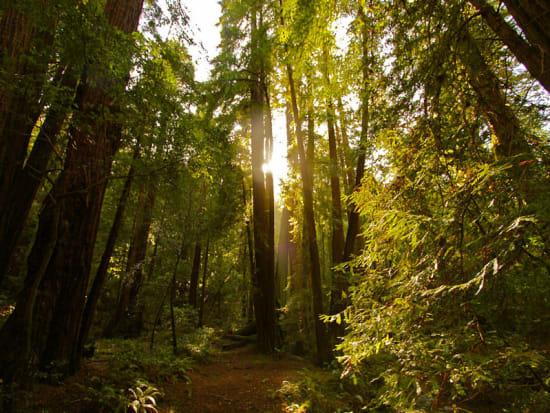 USA_San Francisco_Muir Woods