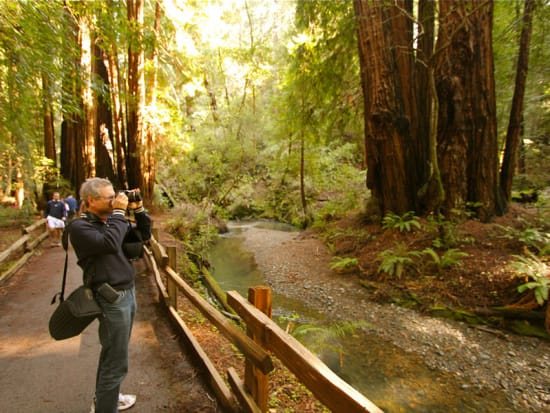 USA_San Francisco_Muir Woods_Old-Growth Forest