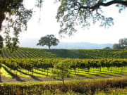 Grape Vineyard_Countryside_joshuasingh_flickr