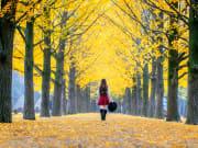 Nami Island girl walking on aisle of golden trees