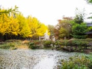 Nami Island in Autumn yellow and green trees