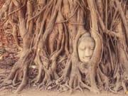 Buddha embedded in a Banyan Tree