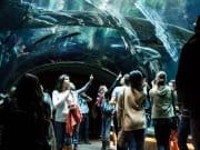 USA_California_Academy of Sciences_Aquarium