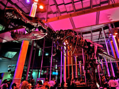 USA_California_Academy of Sciences_Dino Exhibit
