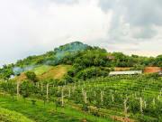 Khao Yai Winery_shutterstock_477953737
