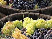 wine route of Cote Maconnais