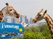 Sydney_Attractions_Pass (10)