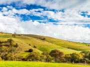 Rolling hills of Adelaide