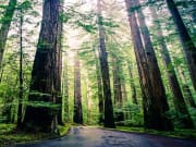 USA_San Francisco_Extranomical Tours_Muir Woods