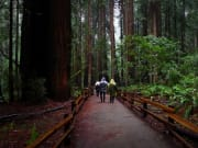 USA_San Francisco_Coastal Redwoods