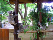 Brisbane_Lone Pine Sanctuary