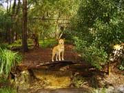 Healesville sanctuary_shutterstock_428559
