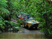 rainforestation nature park amphibian army duck