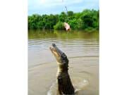 Jumping_Crocodiles (8)