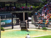 croc_Express_to_Australia_Zoo (7)