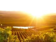 Barossa_Valley_via_Adelaide_Hills (3)