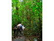 Rainforest_Skywalk (1)