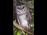 The Wildlife Habitat night tour