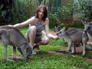 kuranda village kangaroos