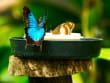 australian-butterfly-sanctuary (11)