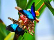 australian-butterfly-sanctuary (2)