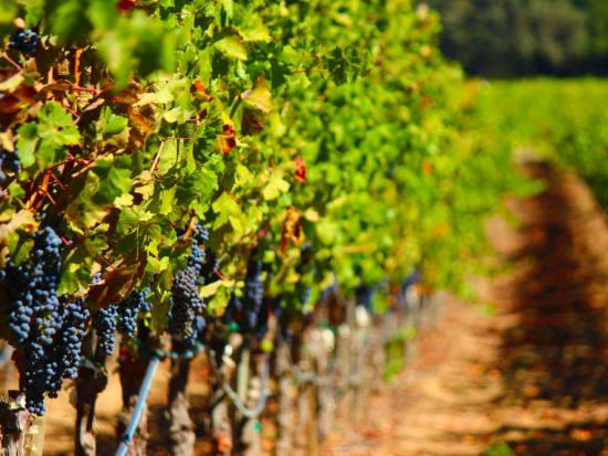 white wine 2-crop