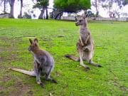 Bonorong Wildlife Park