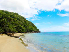 cape tribulation seashore