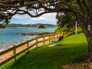 Bay of Islands Paihia to Auckland Half-Day Tour