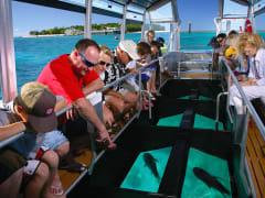 green island glass bottom boat