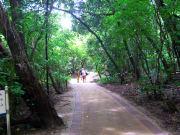 green island walkway