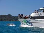Bay of Islands Cruise Tour Dolphin Seeker