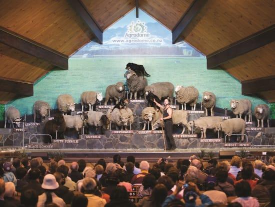 Agrodome Sheep Shearing Show Rotoura Half-Day Tour