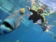 great barrier reef sunlover cruise