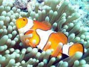 Great_Barrier_Reef (18)