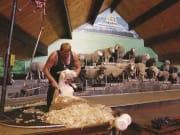 Agrodome Sheep Shearing Show Rotorua